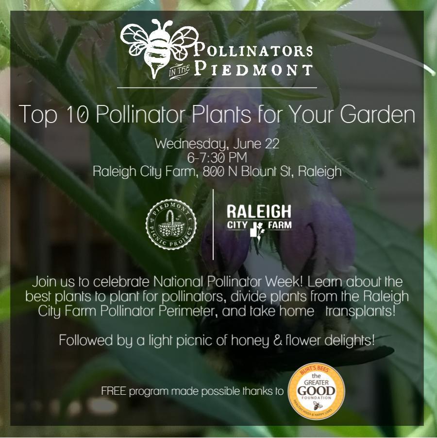 6-22_pollinatorsinthepiedmont