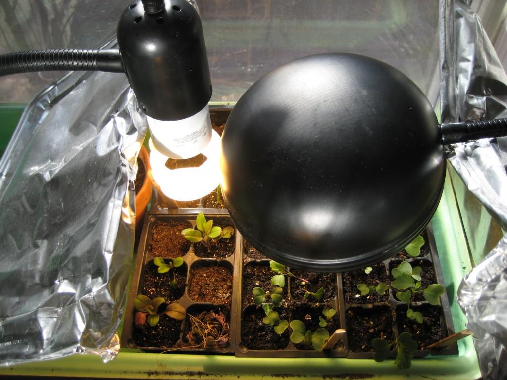 Thrifty Plant Lights