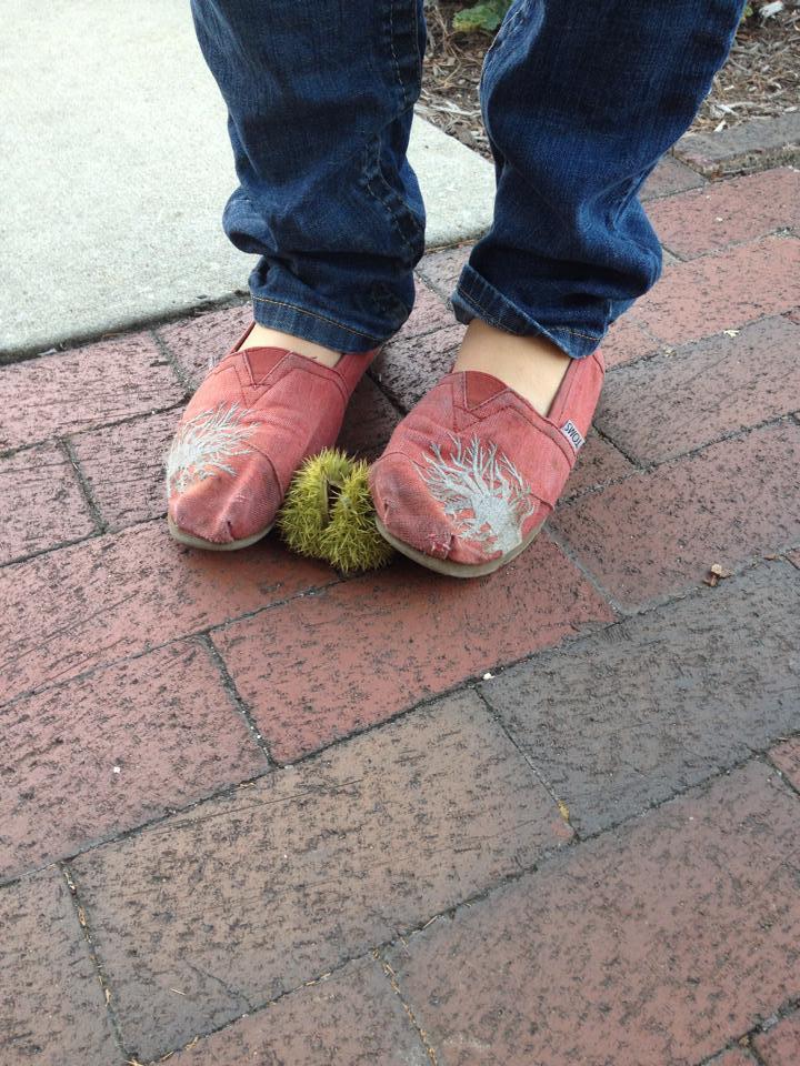 chestnut feet