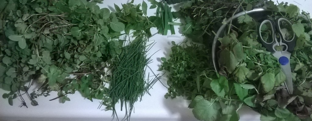Winter Herb Harvest